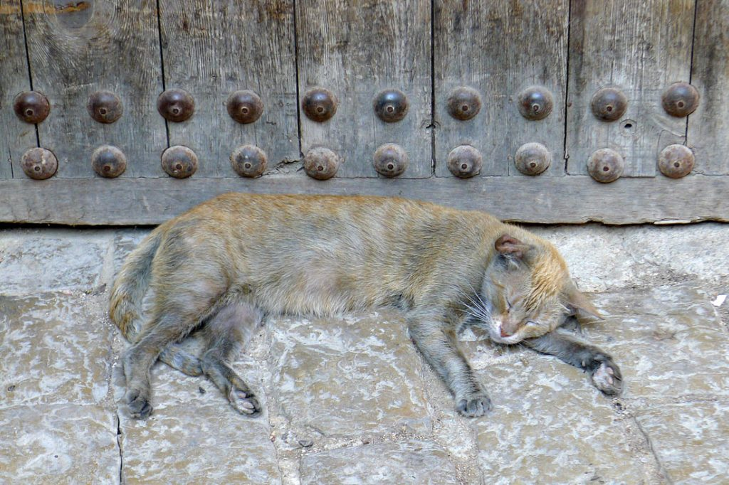 Medina of Fez, animals, cat, World Heritage Site, UNESCO