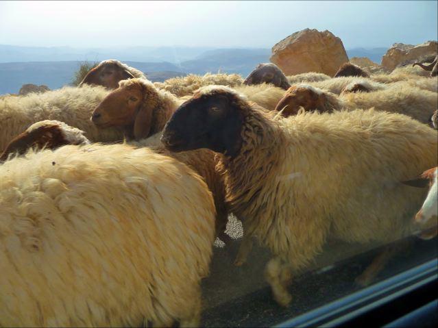 A Jordanian Traffic Jam…