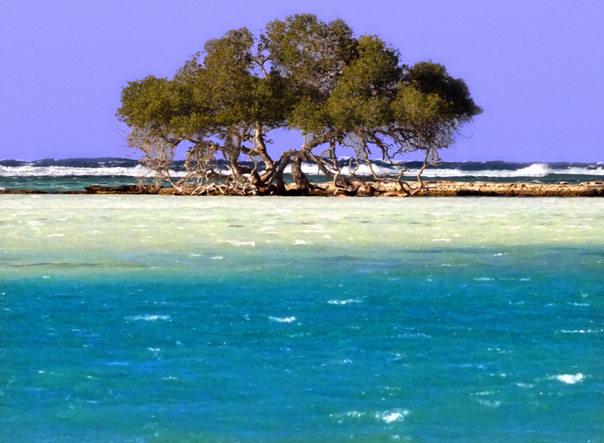 Tree, Red Sea, Egypt, The Middle East