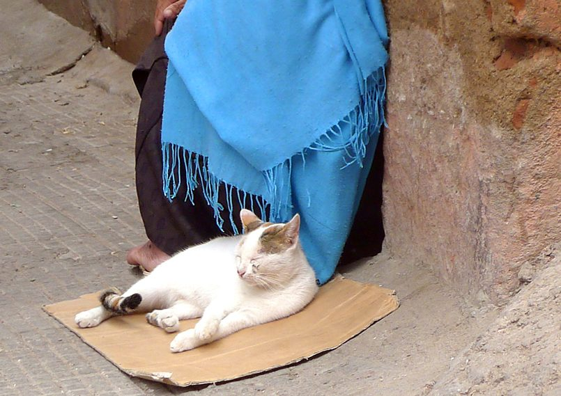 Marrakesh Beggar Woman With Tame Cat