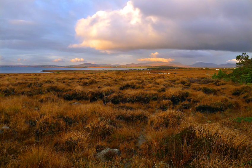 peat, bog, twilight, Ireland, Mayo, sweet light