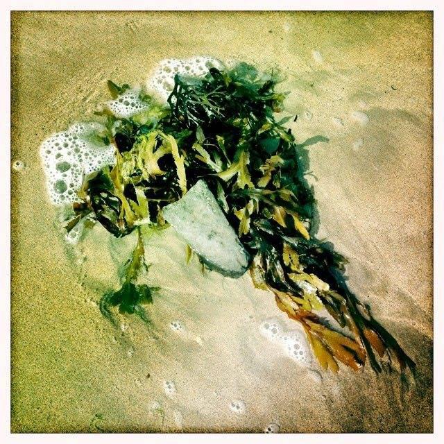 Beachcomber, photography, Mulranny, Ireland